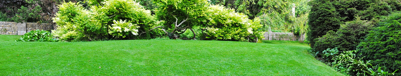 how to restore a tired lawn