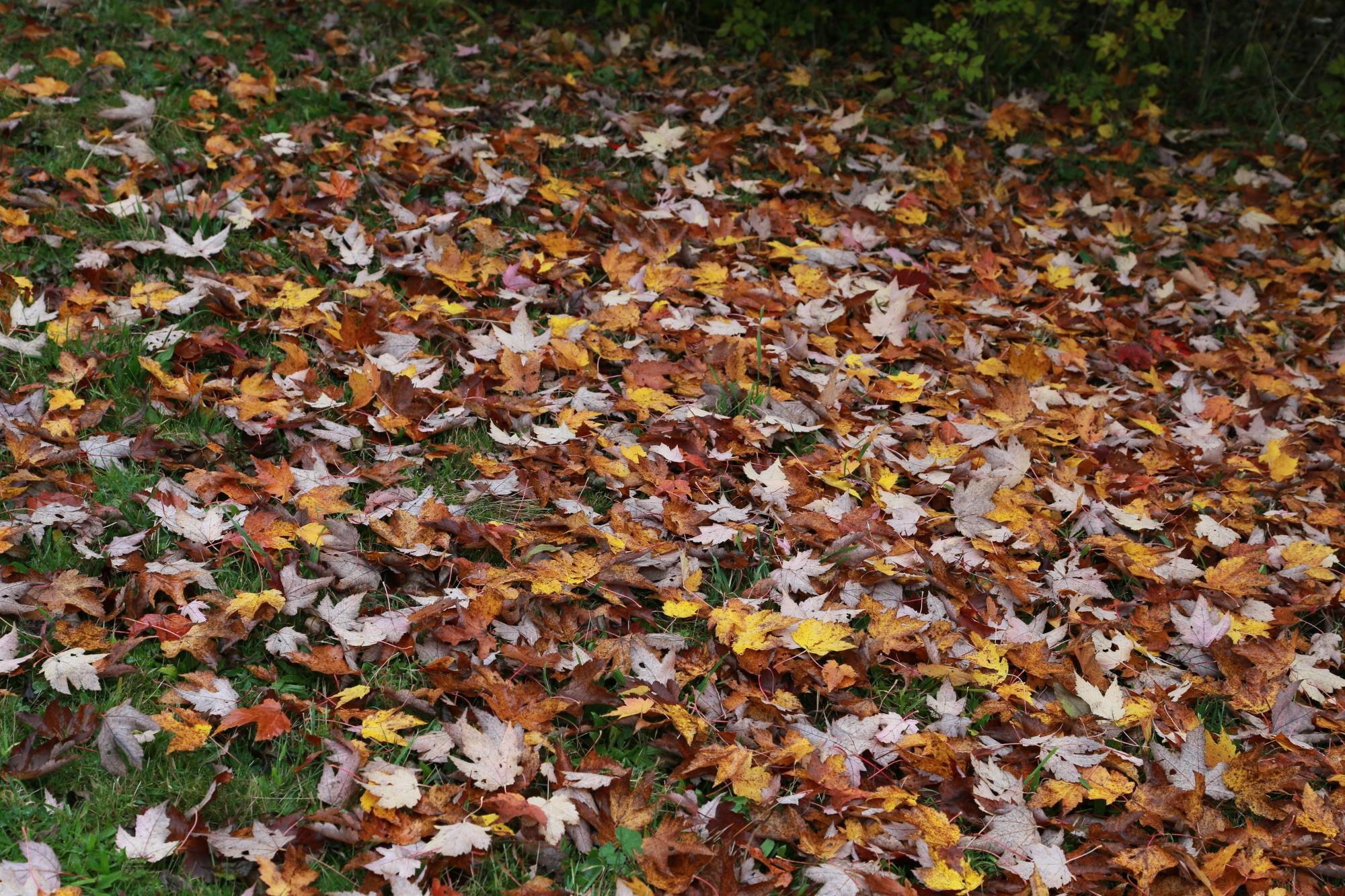Garden World   How to Compost Fallen Leaves   Garden World