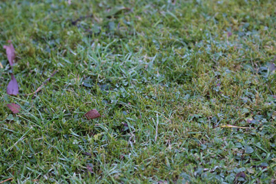 How to kill moss on your lawn   Garden World