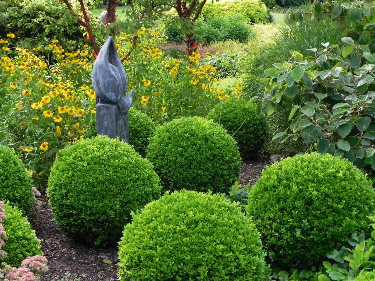 How To Keep Buxus Healthy Garden World
