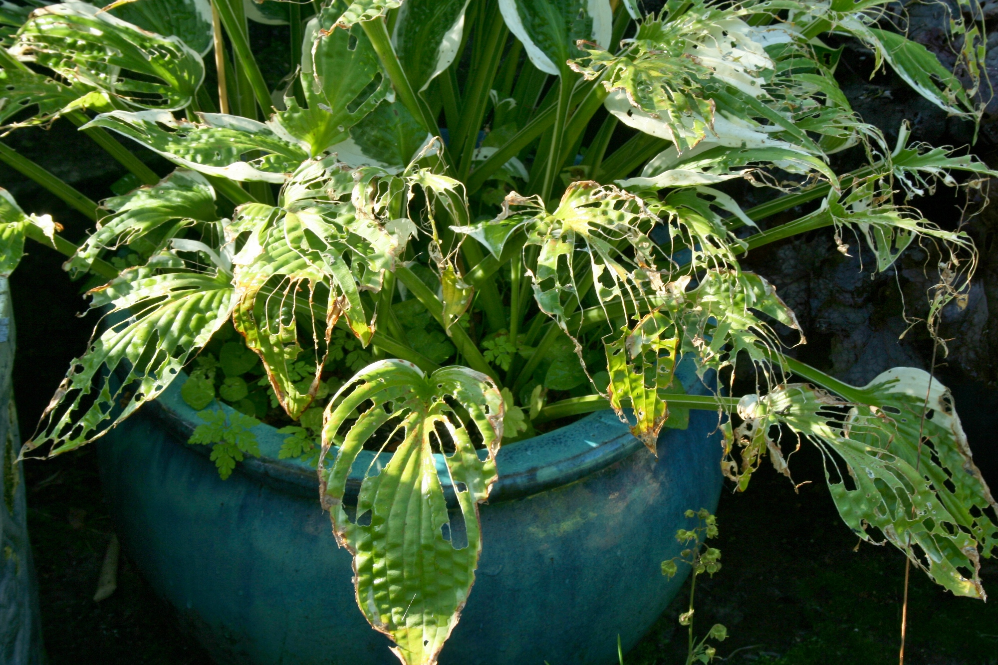 How To Control Slugs Organically Garden World