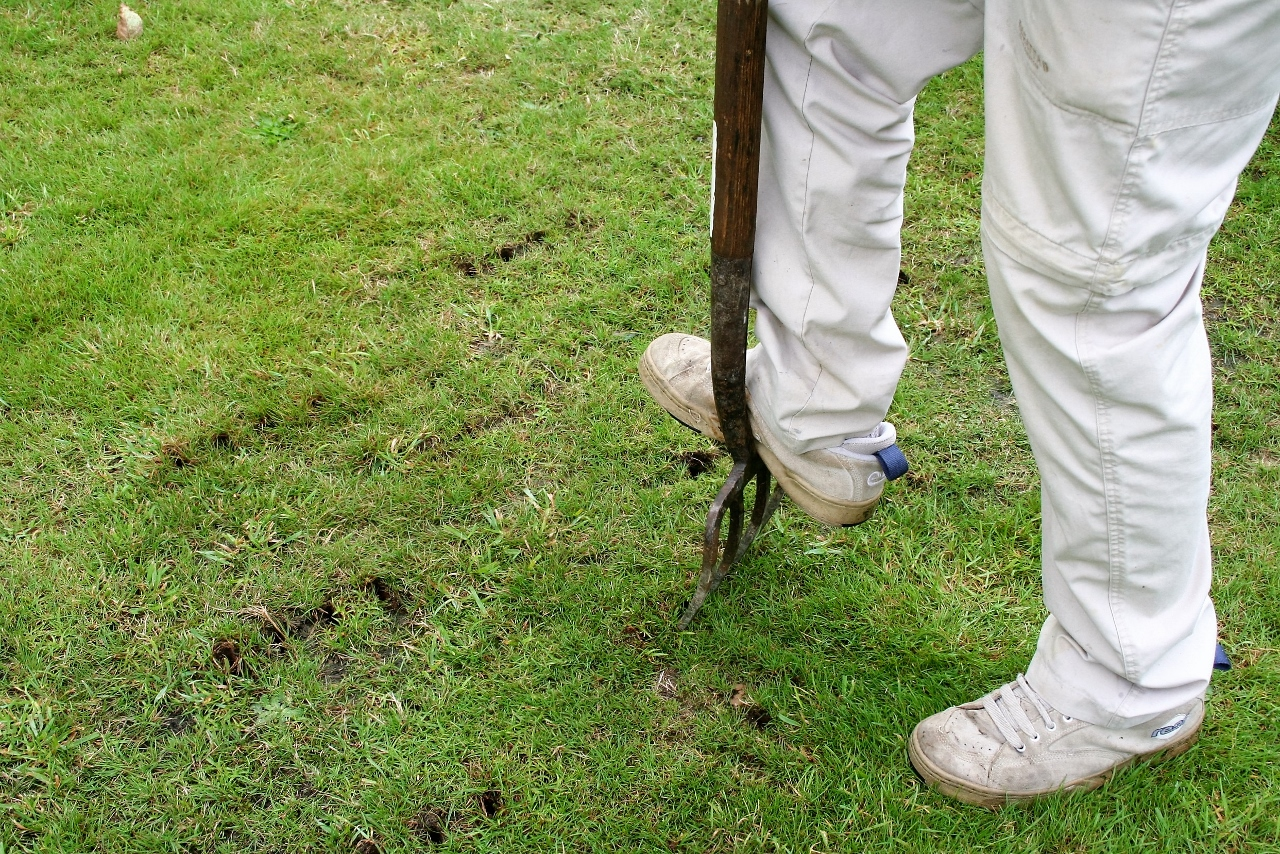 How to Restore a Tired Lawn | Garden World