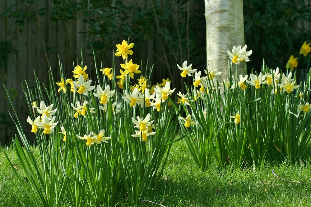 Planting Spring Flowering Bulbs Garden World